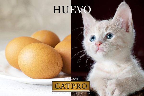 Ingrediente del mes: El huevo presente en CATPRO